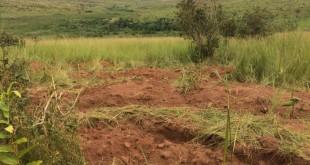 Fosse commune découverte aux alentours de Tshimbulu. © RFI/Sonia Rolley