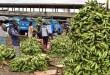Selon des prévisions, la production camerounaise pourrait de nouveau connaître une courbe ascendante en 2017
