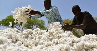 Les initiateurs du projet ne sont pas à leur première initiative pour un coton plus rémunérateur en Afrique.