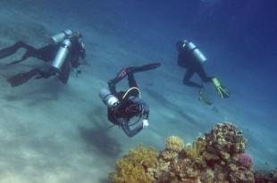 Des plongeurs dans l'océan pacifique, aux États-Unis.