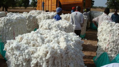 Sodecoton (Cameroun, coton)