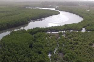 © Capture d'écran d'un reportage France 24 Rives du fleuve Casamance, dans la région sénégalaise du même nom.