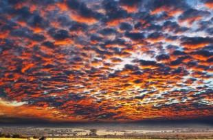 © Galyna Andrushko/Shutterstock.com Des zèbres dans la savane namibienne.