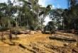 Exploitation de bois dans une forêt camerounaise, en octobre 2007 afp.com - Delphine Ramond