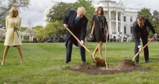 © JIM WATSON/AFP Donald Trump et Emmanuel Macron plantent un chêne offert par le président français pour symboliser la force des relations entre Paris et Washington, lundi à la Maison-Blanche.