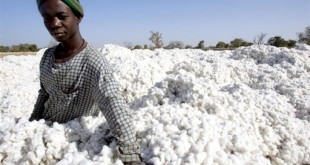 Production de coton au Burkina Faso. © Issouf Sanogo/AFP