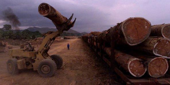 Exploitation de bois au Gabon (photo d'illustration). © SAURABH DAS/AP/SIPA