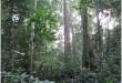 Forêt Cameroun